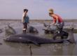Dix-sept dauphins se sont échoués sur l'estran loidais